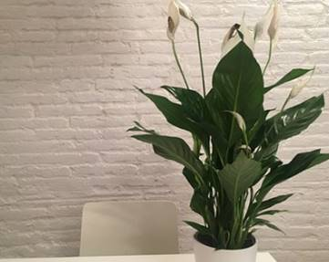 Indoor garden designs